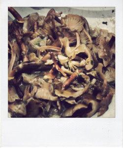 aggiungete-i-funghi