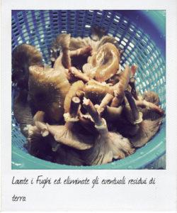 lavate-i-funghi